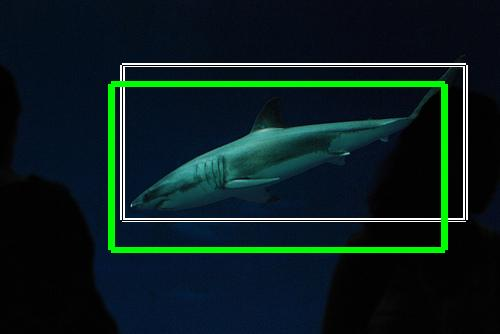 Display results 441 [n01484850 - great white shark, white ...